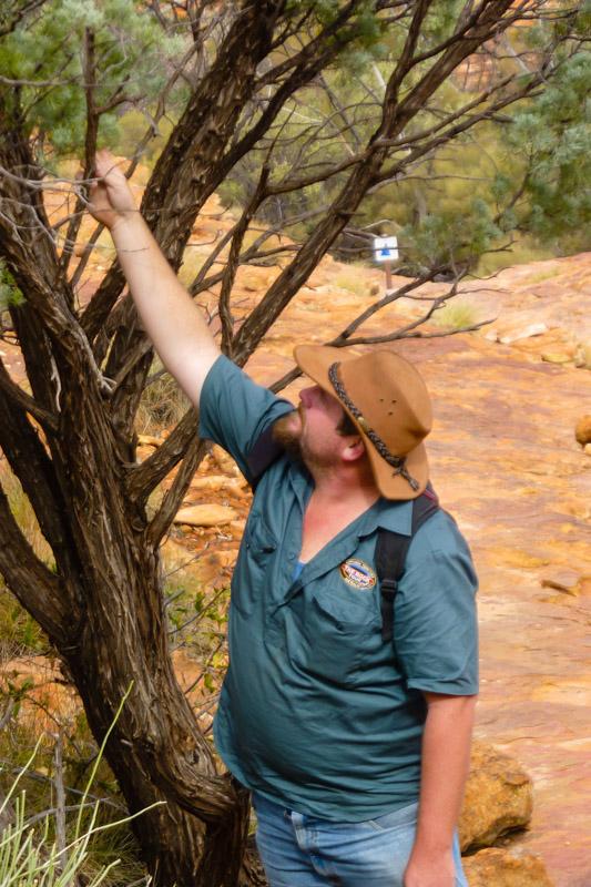 Guide bei der Tour zum Uluru erklärt Flora und Fauna