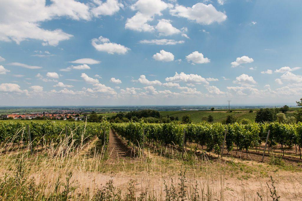 Rheinland Pfalz Weinberg