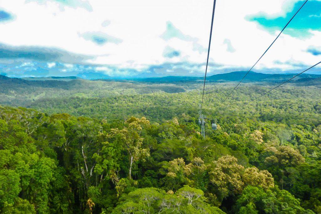 Regenwald Australien