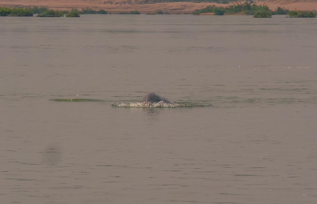 Kratie Delfine